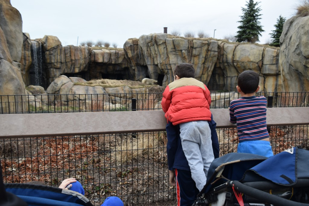 New Polar Bear Exhibit