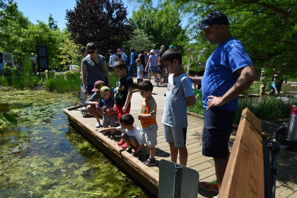 Tadpole & Frog Pond