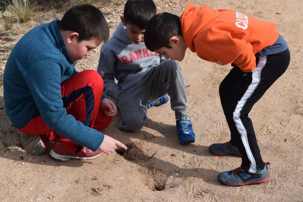 Finding rattlesnake holes?